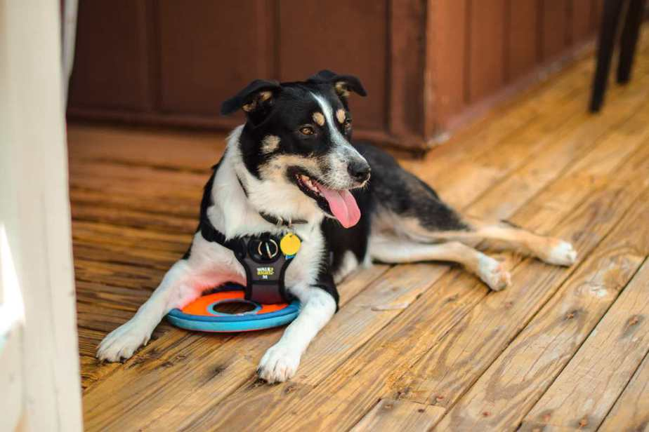 Are All Service Dogs AllowedIn Dollar General?Are All Service Dogs AllowedIn Dollar General?