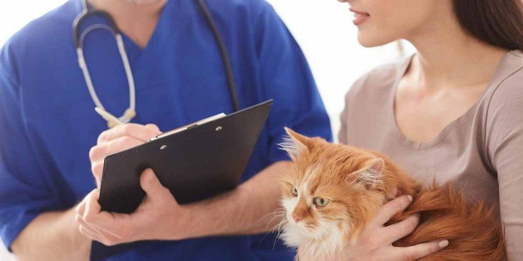 Does CVS Fill Pet Prescriptions?