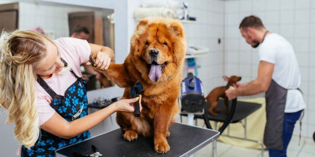 How Much Does Grooming Cost At Banfield Pet Hospital?